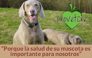 Bienvenidos a Provetcre